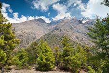Free Pine Forest In Annapurna Trek Stock Photo - 26930480