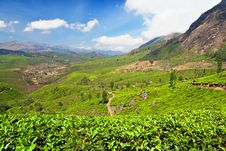 Free Tea Plantation Stock Photography - 26930832