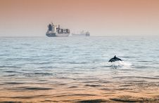 Free Dolphin Playing Royalty Free Stock Photography - 26932127