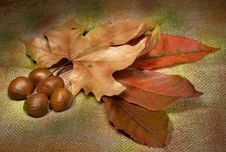 Free Warm Colors Of Autumn Stock Photo - 26932510