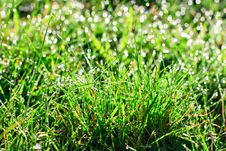 Free Fresh Morning Dew In Grass Stock Photos - 26936273