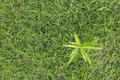 Free Top View Sprout On Grass Royalty Free Stock Photos - 26947918