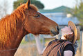 Free A Horse Leans In To Give Pretty Young Lady A Kiss Royalty Free Stock Images - 26949399