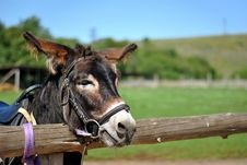 Free Donkey Royalty Free Stock Photography - 26943087