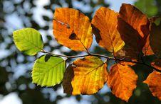 Free Autumn Leaves Stock Image - 26943761
