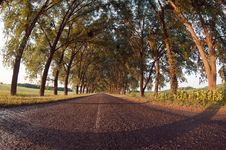 Free Road Under The Trees Stock Image - 26948151