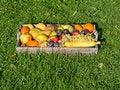 Free Fruit Mixed Stock Photography - 26952862