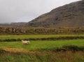 Free Icelandic Landscape Stock Photos - 26958453