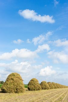 Free Flowers Drying On A Haystack Royalty Free Stock Photography - 26950497