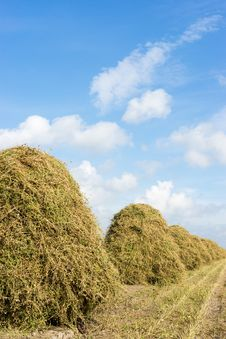 Free Flowers Drying On A Haystack Royalty Free Stock Photos - 26950578