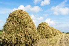 Free Flowers Drying On A Haystack Royalty Free Stock Images - 26950609