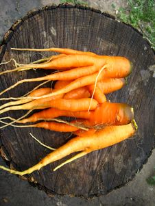 A Bunch Of Pulled Out Carrots Stock Photos