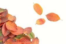 Free Autumn Leaves Stock Photos - 26953333