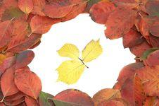 Free Autumn Leaves Royalty Free Stock Photos - 26953348