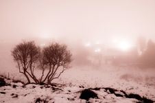 Free Foggy Tree Stock Image - 26955851