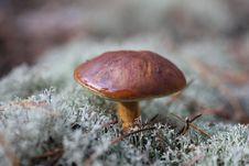 Free Autumn Mushrooms Royalty Free Stock Photo - 26956105