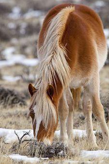 Beautiful Wild Horse In Wyoming Royalty Free Stock Image