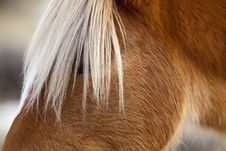 Free Portrait Of A Wild Mustang In Wyoming Royalty Free Stock Images - 26957009