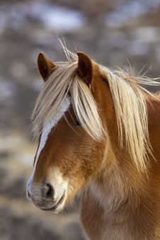 Wild Horse Portrait Stock Images
