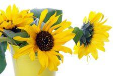 Free Beautiful Sunflowers Stock Photos - 26958403