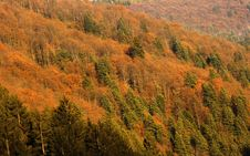 Free Autumn Landscape Forest Royalty Free Stock Photography - 26958437