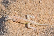 Free Camouflaged Reptile Royalty Free Stock Image - 26960396