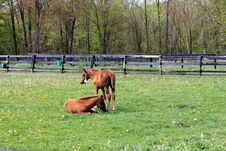 Free Duo Of Ponies Resting In Green Fields. Royalty Free Stock Photo - 26960575