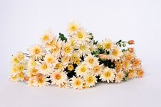 Free Autumn Flowers Chrysanthemum Royalty Free Stock Photography - 26964717