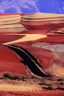 Red Land Stock Images