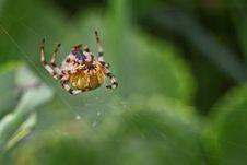 Free Spider Web Stock Photo - 26967560