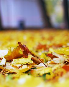 Free Autumn Nature: Yellow Fallen Leaves In The Park Stock Images - 26968344