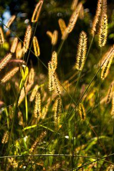 Free Sunny Grass Stock Photography - 26968942