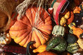 Free Pumpkin With Assorted Gourds Stock Photos - 26977993