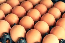 Free Eggs In Carton Tray Stock Photo - 26973080