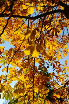 Colorful Tree In Autumn Berlin Royalty Free Stock Images