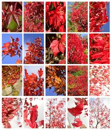 Free Autumn Leafs Set Stock Images - 26973654