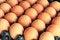Free Eggs In Carton Tray Stock Photo - 26973080