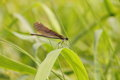 Free Dragonfly. Royalty Free Stock Photos - 26980348