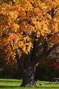 Free Autumn Tree Stock Photo - 26980910