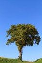 Free Lonely Tree Stock Photo - 26981570