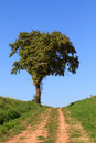 Free Lonely Tree Stock Photography - 26981702