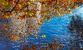 Free Canal In Autumn Stock Photography - 26984132