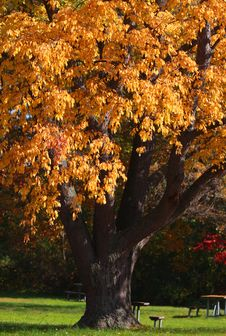 Free Autumn Tree Stock Photo - 26980910