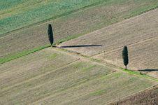 Free Cipress In Tuscany Royalty Free Stock Photos - 26984048