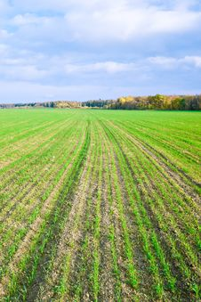 Free Winter Crops Royalty Free Stock Photography - 26987907
