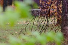 Free Autumn Park After Rain Royalty Free Stock Image - 26989166