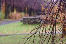 Free Autumn Park After Rain Royalty Free Stock Photography - 26989167