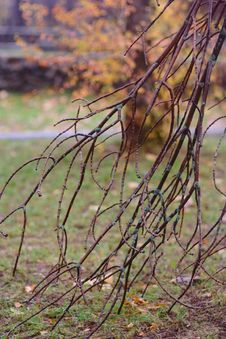 Free Autumn Pattern With Branch Stock Photo - 26989170