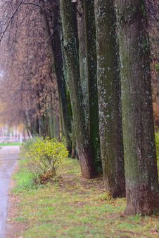 Free Autumn Park Stock Image - 26989181