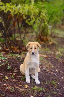 Free Dog In The Autumn Park Royalty Free Stock Photo - 26989185